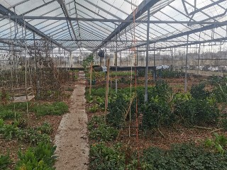 One of Oisin's glasshouses in Claregalway